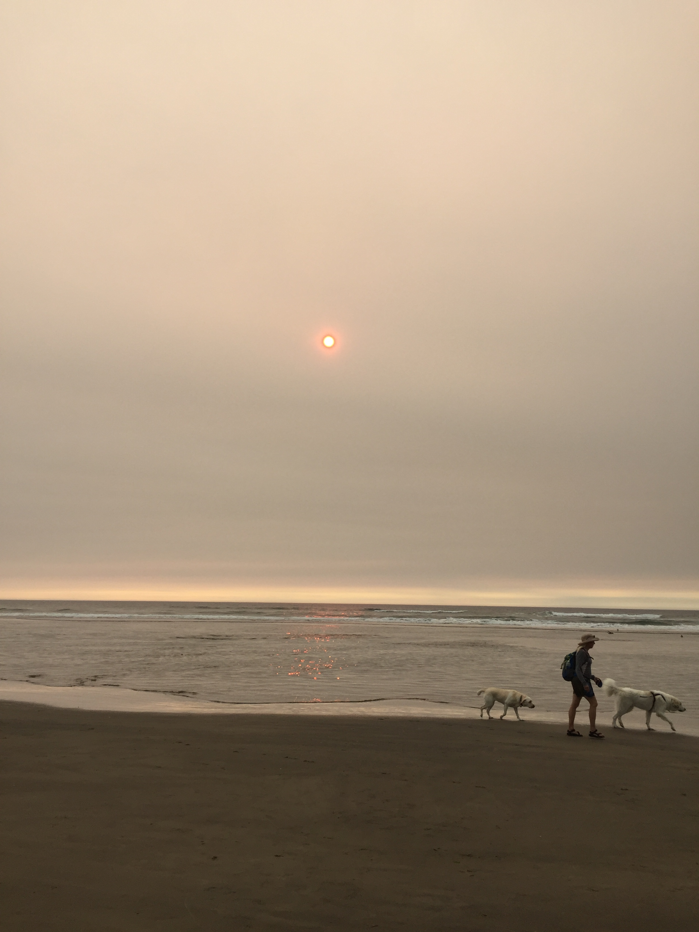 Oregon beach, hazy sun, person walking two dogs.